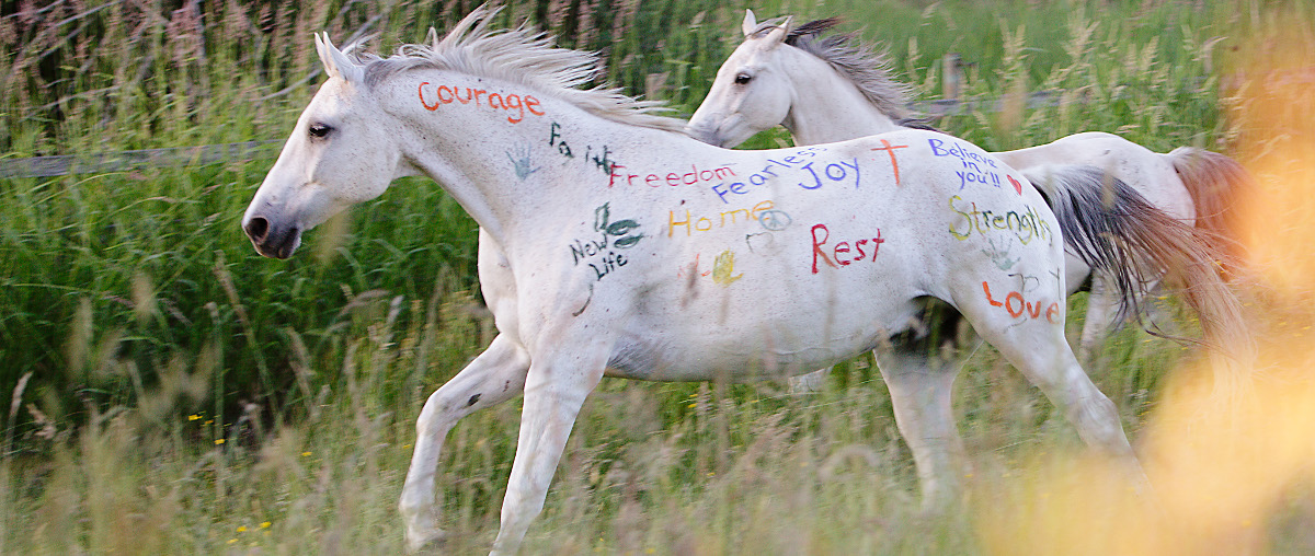 Permalink to:Our Horses